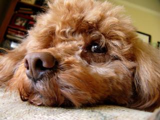 口臭の原因になる鼻の病気