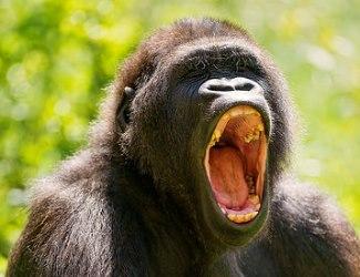 扁桃腺が臭い?口臭と扁桃腺の関係はコレ!