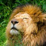 エチケット マウスミスト(ライオン)の口臭への効果はどうなんだろう?
